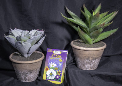 Cacti decor & Texas Wildflower seed packet (sold separately)